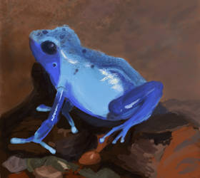 Frog Study by Justyne