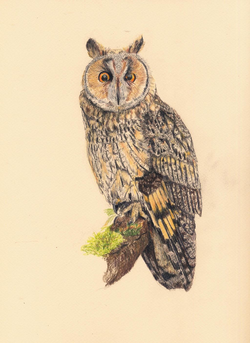 Long eared owl tattoo