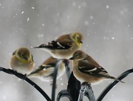 Feeding Time by debgay