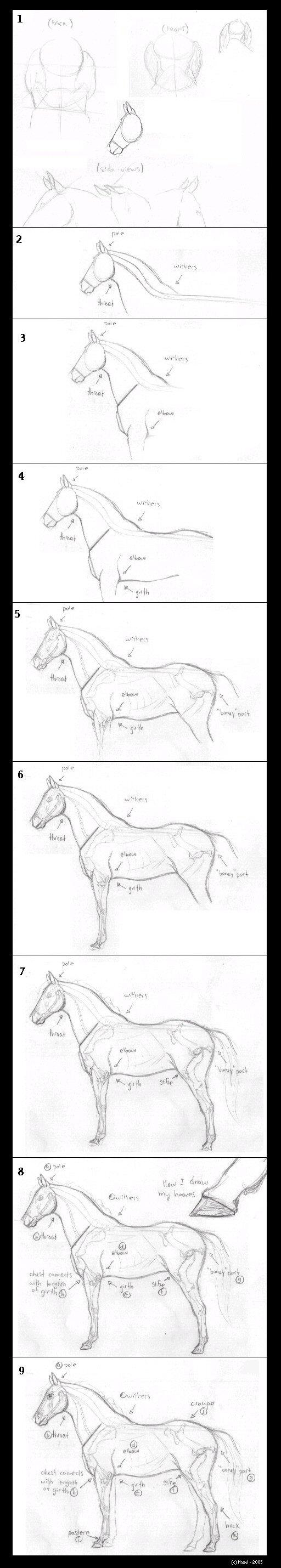 How to Draw Horses by Hazel Rah Tutorial___How_To_Draw_Horses