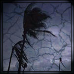 Palm Tree in a Hurrican