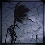 Palm Tree in a Hurrican by DnKrow7