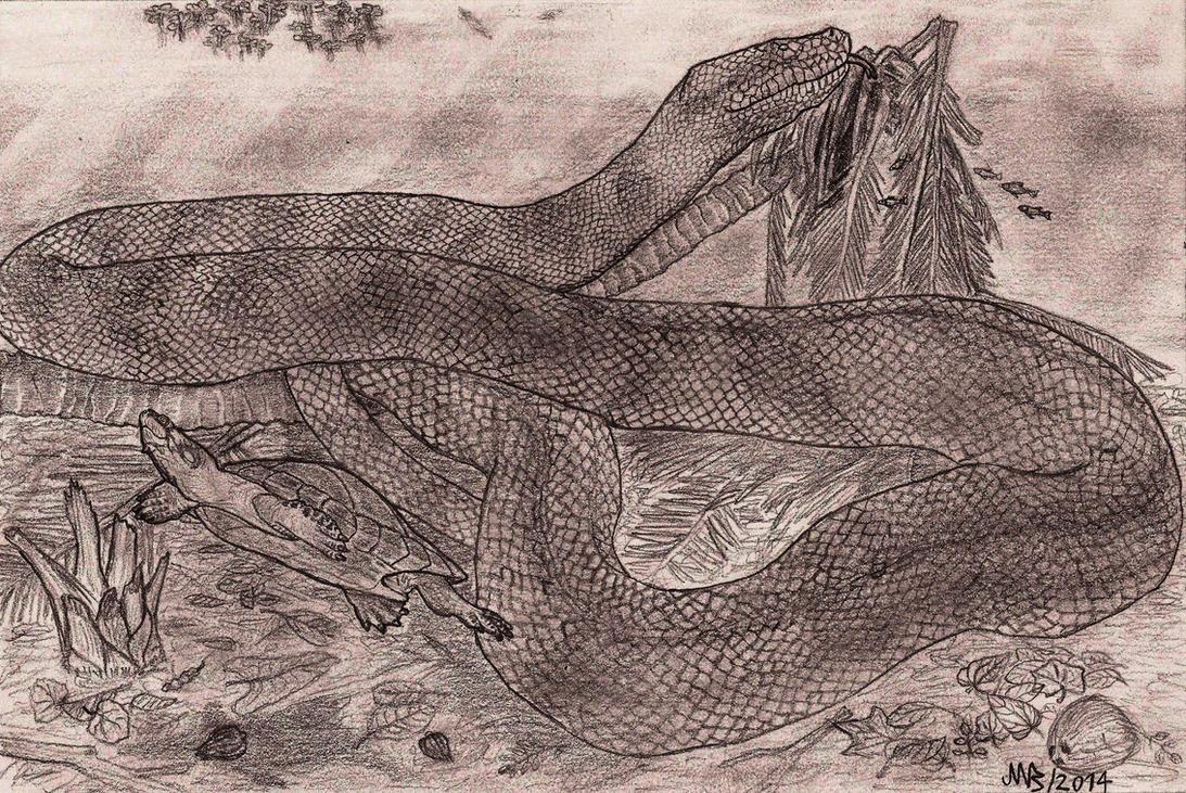 Titanoboa cerrejonensis (2014). by jwmorenob