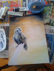 WIP barn owl by Kel-Del