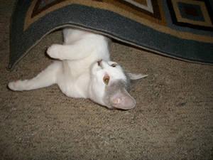 Attack Kitty!! 3
