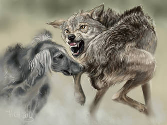wolf hunting by Animal75Artist