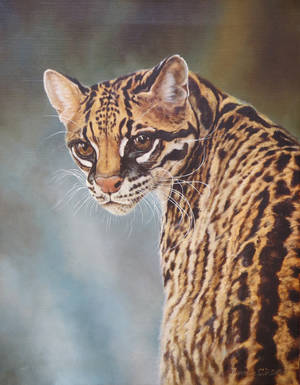 ocelot by Animal75Artist