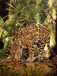 Jaguar by Animal75Artist