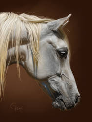 light grey by Animal75Artist