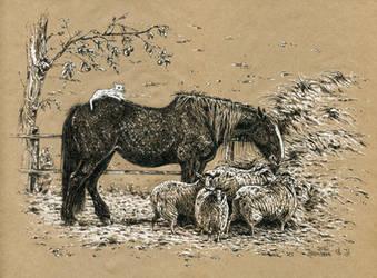 an elderly horse by Animal75Artist