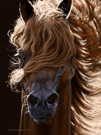 Arabic beauty horses by Animal75Artist on DeviantArt