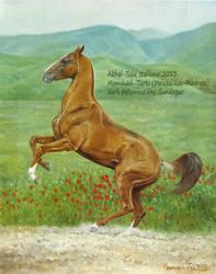 akhal-teke stallion,dark palomino