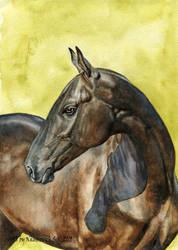 Akhal-Teke stallion,Garatam