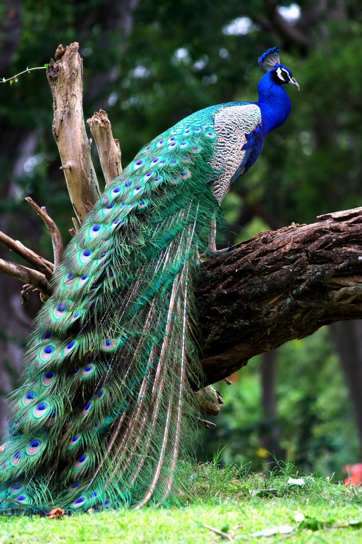 Majestic Bird by Kaniala83