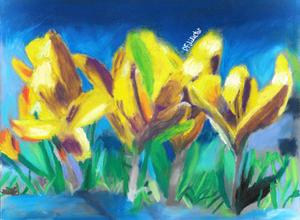 Yellow Croncus Flowers