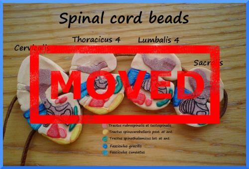 MOVED: Spinal cord beads by OssaDigitorumManus