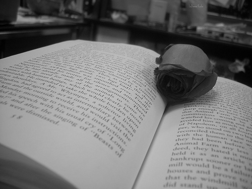 The Rose, The Book by BeautifulPluto