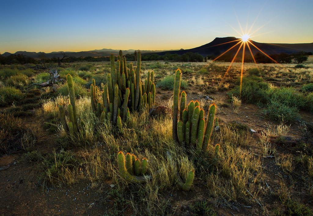 Desert Morning by carlosthe