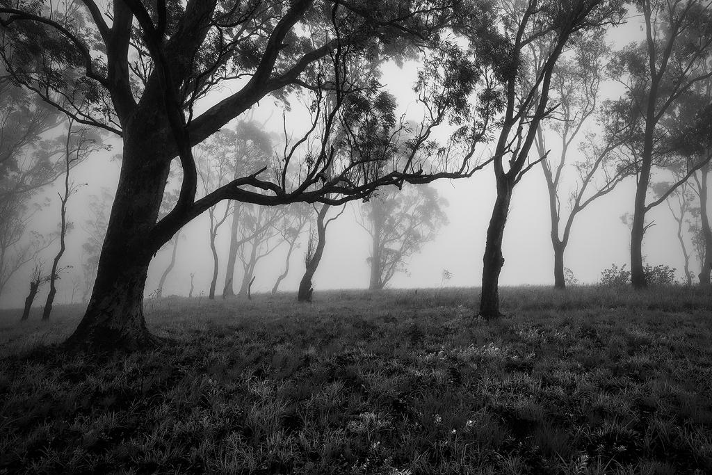 Misty Days by carlosthe