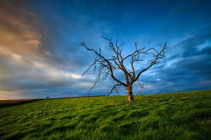 A dead tree and some grass by carlosthe