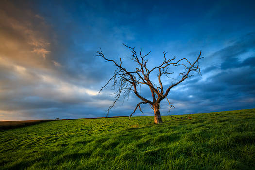 A dead tree and some grass