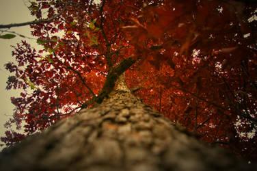 Autumn 4 by Pretty-Jester