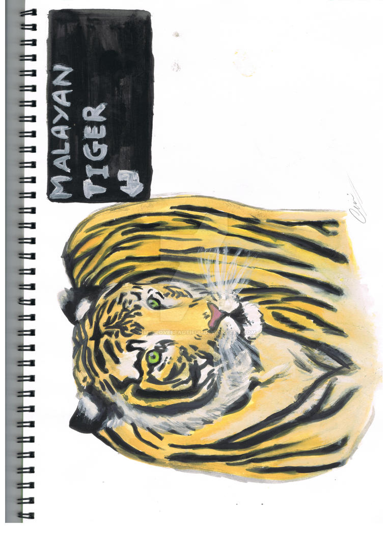 malayan tiger drawing - photo #24