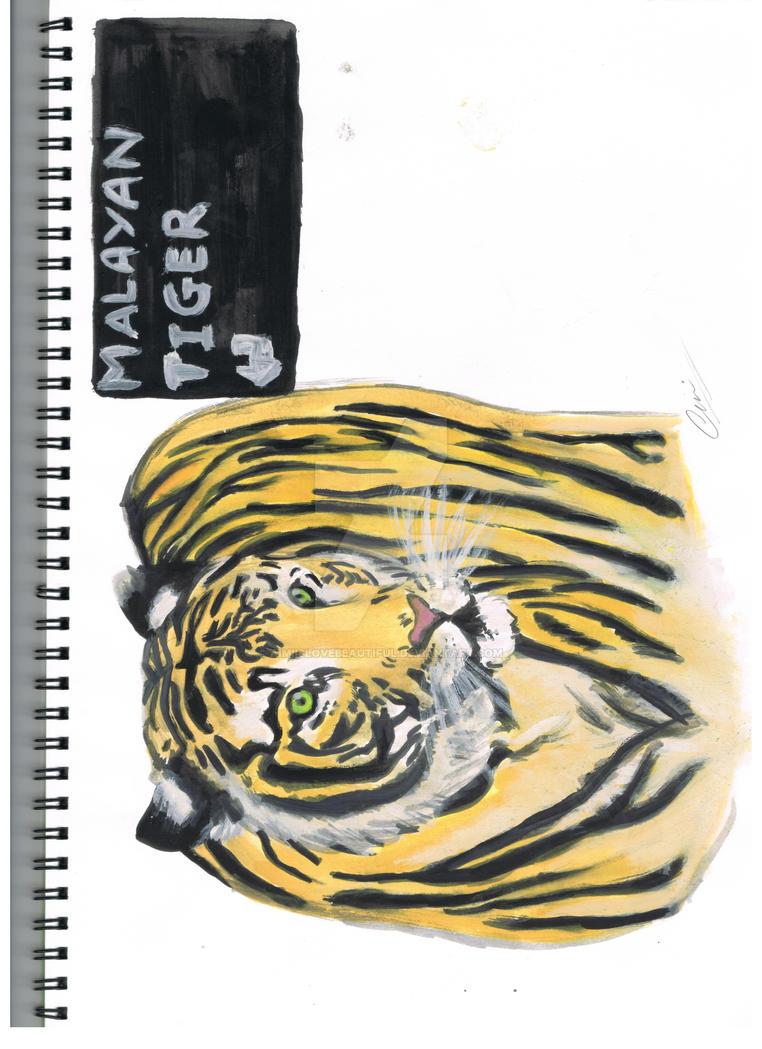 malayan tiger drawing - photo #24
