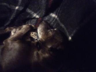 Cleo Sleeping