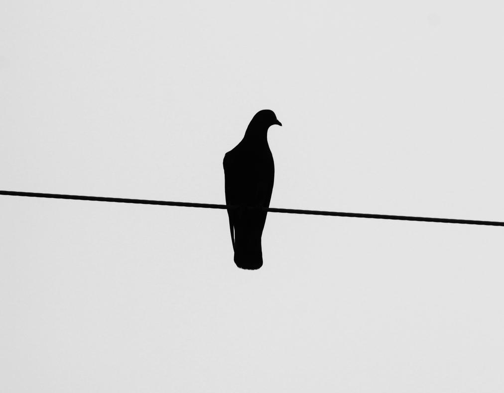 Silhouette by RavenousDrake