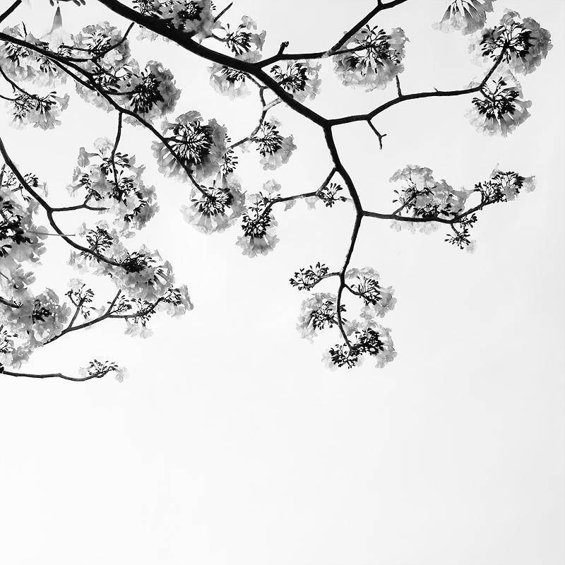 white flower by 7Redhotz