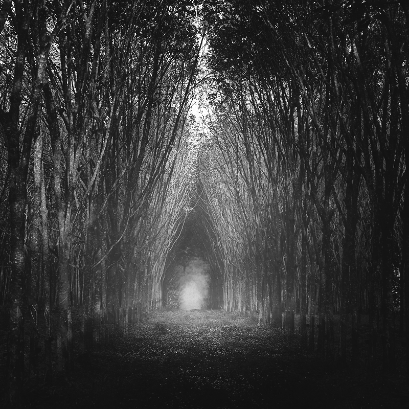 tree tunnel by 7Redhotz