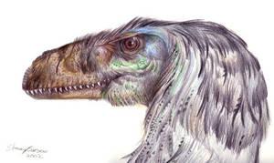 Dromeaosaurid