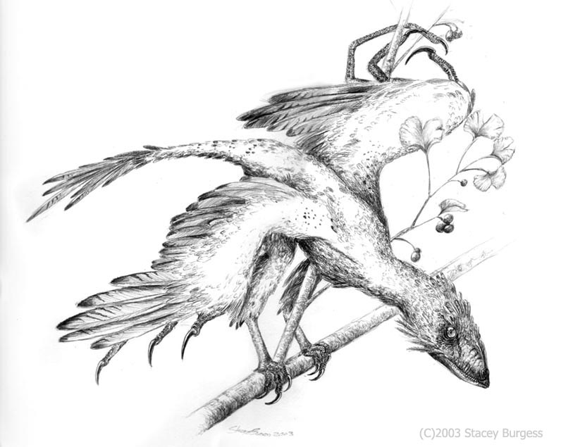 Scansoriopteryx by Andalgalornis
