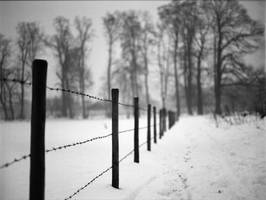 barbed wire by Lkeke