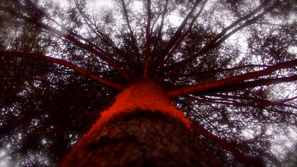 Red tree by voolksorf