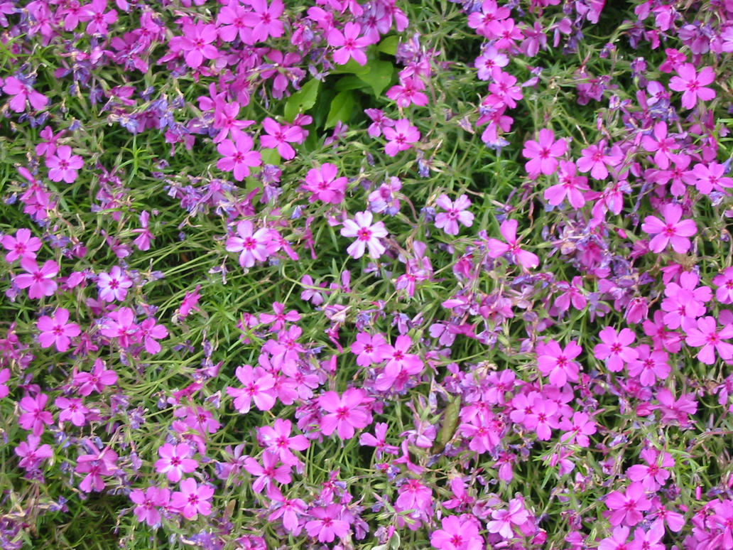 pink flower patch by underln stock on DeviantArt