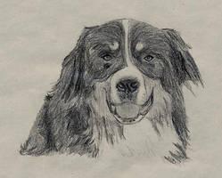 Bernese mountain dog by Alistanniel
