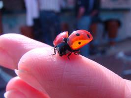 Ladybird by Alistanniel