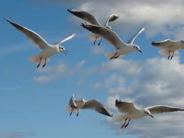 Flying gulls by Alistanniel