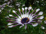 Beautiful flower by Alistanniel