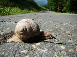 Burgundy snail by Alistanniel