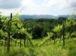 Vineyard by Alistanniel