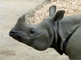Indian rhinoceros by Alistanniel