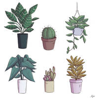 Plants by apanda54
