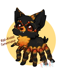 Fetch! Red-Kneed Tarantupup