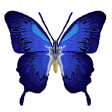 flutterby by pantypuke