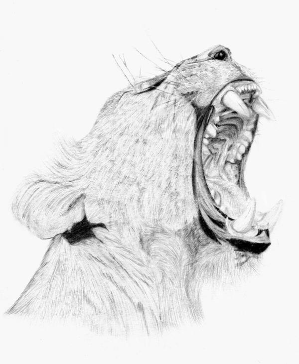 Lioness' roar