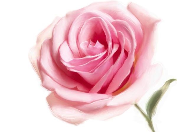 Quick Rose by Lestatslover84