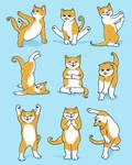 VOTE YOGA CAT by dandingeroz